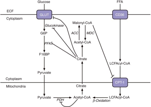 The Glucosefatty Acid Cycle A Simplified Diagram Sh Open I
