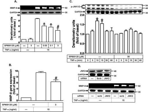 TNF-α induces MMP-9 expression via JNK1/2 phosphorylation. (A) Cells were pretreated with SP600125 for 1 h and then incubated with TNF-α (15 ng/ml) for 24 h. (B) Cells were pretreated with SP600125 (3 μM) for 1 h and then incubated with TNF-α (15 ng/ml) for 6 h. The isolated RNA samples were analyzed for the levels of MMP-9 mRNA by real-time PCR. (C) Cells were pretreated without or with SP600125 for 1 h and then incubated with TNF-α (15 ng/ml) for various time intervals. The cell lysates were analyzed by Western blot using an anti-phospho-JNK1/2 antibody or anti-GAPDH (as an internal control) antibody. Data are expressed as mean±SEM of three independent experiments. #P < 0.01, as compare to the cells treated with TNF-α alone. *P < 0.05, as compare to the cells treated with TNF-α alone (A) or vehicle (C). (D) Cells were transfected with JNK2 siRNA for 24 h and then incubated with TNF-α (15 ng/ml) for 24 h. (A,D) MMP-9 expression was determined as described in Figure 1. The cell lysates were determined by Western blot using an anti-JNK2 or anti-GAPDH antibody.