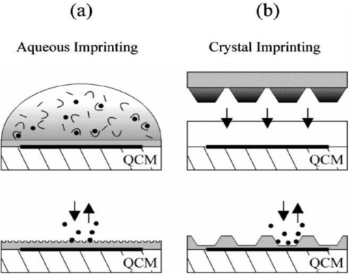 Surface-imprinting strategies on pre-coated QCMs. (a) Aqueous monomer solution containing the template is dripped onto the transducer surface for self-organizing receptor sites on the thin film surface. (b) A stamp with densely packed trypsin crystals is pressed into the pre-polymerized coating, templates are removed after polymerization. Reprinted with permission from [10], © 2006 The Royal Society of Chemistry.