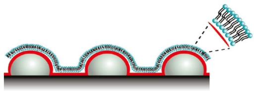 Schematic representation of lipid bilayers used for protein binding. Reprinted with permission from [45], © 2011 American Chemical Society.