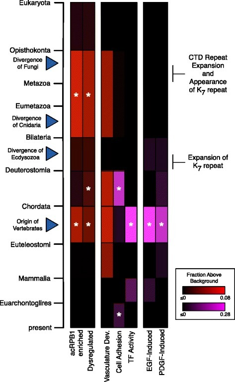 Summary of the origins of subsets of genes regulated by acRPB1 with respect to relevant evolutionary events. The period between K7 repeat expansion and the diversification of vertebrates, shows particular enrichment for the origin of acRPB1 regulated genes and genes with functions relevant to animals. Each column in the heat map represents the evolutionary origin distribution of a set of genes. Color intensity reflects the magnitude of increase over background in each evolutionary window. Due to the large difference for some gene sets, two scales were necessary (red and purple). Asterisks indicate significant increase over background (Bonferroni-corrected p < 0.05). Relevant evolutionary events are identified with blue triangles. For reference, the first two columns represent the acRPB1 enriched and dysregulated origin distributions (Figure 4). The remaining columns give the origin distributions for functional subsets of genes enriched among acRPB1 sensitive genes.