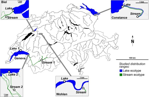 Map of the four study lake systems in Switzerland.Lake populations of stickleback are indicated in blue and stream populations (all streams are inlets flowing into the lakes) in green. The Constance and Geneva systems harbour distinct stickleback lineages while the Biel and Wohlen (Bern) systems lie in the stickleback hybrid zone. Note that the distribution ranges of lake and stream populations overlap in the Constance system as lake fish migrate upstream to spawn in spring. Map copyright: Wikimedia (CC BY-SA); Inlets copyright: OpenStreetMap contributors (CC BY-SA).
