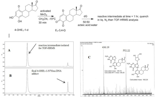 Oxidation of 4-OHE1-1-d to E1-3,4-Q-1-d and subsequent reaction with dG. (A) Reverse phase C-18 HPLC analysis after 1 h (B) Reverse phase C-18 HPLC analysis after 4 h (C) TOF-MS analysis of the early eluting peak in the positive ion mode.