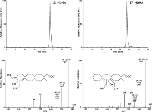 Novel ASA triggered HDHA products generated by human recombinant COX-2 ASA. 17R-HDHA. Human recombinant COX-2 treated in the presence and absence of 2 mM ASA was incubated with DHA (10 μM, 30 min, 37°C). Incubations were stopped with 2 ml cold methanol, extracted and taken for LC-MS-MS analyses. Results are representative of incubations from more than eight separate experiments, some with 1-14C-labeled DHA. (Top) LC-MS-MS chromatogram of m/z 343 showing the presence of mono-HDHA. (Bottom) MS-MS spectrum of (left) 13-HDHA without ASA treatment and (right) 17R-HDHA with ASA treatment.