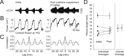 The rhythmicity and periodicity of state alternations under urethane were not affected by moderate increases in anaesthetic dosage.A) Long duration raw cortical EEG traces demonstrating the electrographic effects of a moderate increase in the depth of urethane anaesthesia. Although the overall amplitude of the signal increased following the supplemental dose, state alternations (apparent as rhythmic changes in signal amplitude) were still observed. B) Spectrographic power at 1 Hz for the traces shown in A. Following the supplemental dose, power continued to fluctuate at a similar periodicity although there was an increase in the overall power in addition to the time spent in the deactivated state (and consequently a decrease in the time spent in the activated state). C) Autocorrelation of power values in B demonstrating similar rhythmicity before and after supplemental urethane administration. D) Individual (paired for animal across conditions by symbol and line) and overall averages demonstrating the consistency of alternation period duration before and after the supplemental doses of urethane across all experiments. Neither the individual nor the overall averages were significantly different.