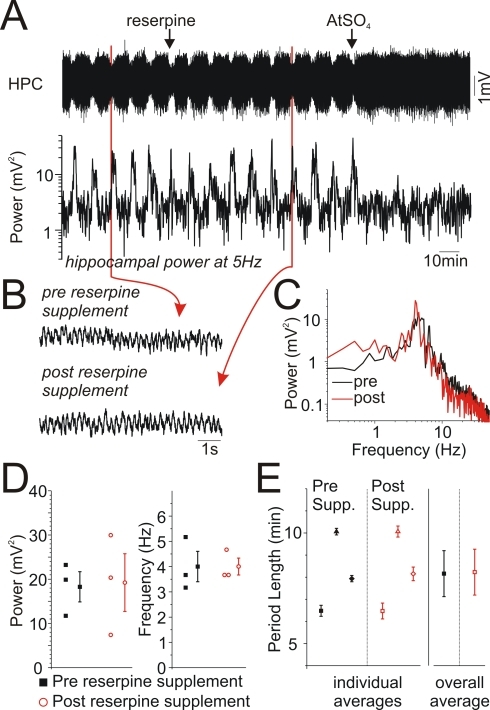 Monoaminergic depletion affected neither the activated state nor the alternations between states under urethane anaesthesia.A) Continuous hippocampal EEG traces and spectrographic power at theta frequencies under urethane anaesthesia following reserpine (5 mg/kg) pretreatment. Alternations between states were obvious as fluctuations in the amplitude of the raw EEG in addition to the spectrographic theta power (5 Hz). A further supplemental i.p. administration of reserpine (5 mg/kg) was without effect upon either the activated state or the alternations between states. However, a subsequent i.p. injection of atropine (ATSO4: 50 mg/kg) completely abolished the activated state and subsequent alternations between state. Hippocampal B) EEG expansions and C) spectra from before and after reserpine supplement demonstrating intact theta activity in both cases. D) Scatterplots of peak power and frequencies for activated states pre and post reserpine supplement. There were no significant differences between pre and post supplement groups. E) Scatterplots of period lengths pre and post reserpine supplements demonstrating that alternations and rhythmicity were not affected by reserpine.