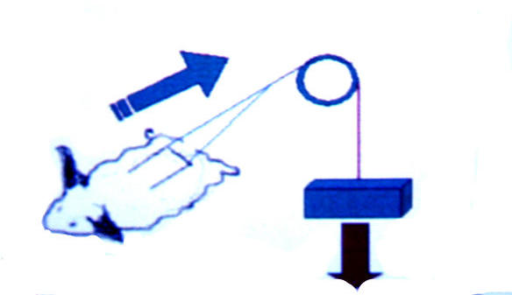 Schematic view of the application of 2.46 Newton force to the tip of flaps with pulleys.