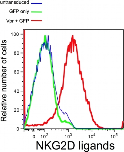 Vpr alone is capable of inducing NKG2D ligands surface expression.Primary CD4pos T-cell blasts were transduced with a lentivirus vector (pPR-Vip) coexpressing Vpr and GFP (red line). As a control the same cells were infected with a lentivirus vector expressing GFP only (green line). Following transduction cells were stained with a fusion protein of human NKG2D and the Fc portion of human IgG1 along with fluorochrome-conjugated goat anti-human IgG1. Histograms were derived following acquisition on a flow cytometer of either 104 viable cells [(for untransduced cells) blue line] or 104 viable GFPpos cells (green and red line). The figure is representative data from two separate experiments.