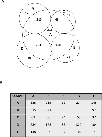 Overlap in Phosphoprotein Identification between CLL cells from Different Patients.A) Venn diagram illustrating the degree of overlap between the phosphoproteins identified in CLL A compared to the phosphoproteins identified in CLL B, C and D. B) Matrix table outlining the number of overlapping phosphoproteins identified for CLL A, B, C and D.