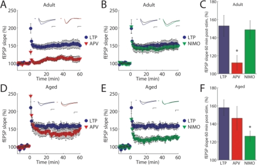 LTP is NMDAR-dependent in adult mice but L-type calcium channel-dependent in aged mice.(A and B) CA1 fEPSP slope in adult mice in control conditions (blue •, n = 14) and with APV (50 µM) (red ▾, n = 11) or nimodipine (10 µM) (green ▾, n = 8) in response to HFS applied at t = 0. Inset, averaged fEPSP traces. (C) Summary data:in adult, LTP is blocked by APV (P = 0.01) but not by nimodipine (P = 0.81). (D and E) fEPSP slope in aged mice in control (blue •, n = 7) and with APV (red ▾, n = 8) or with nimodipine (green ▾, n = 6) in response to HFS. Inset, averaged fEPSP traces. (F) Summary data: in contrast to adult, LTP in aged mice is blocked by nimodipine (P = 0.01) but not by APV (P = 0.48). Scale bars: 10 ms, 0.4 mV. All data are expressed as mean ± s.e.m.