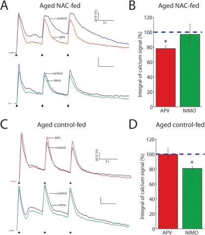 GSH improves NMDAR calcium signals in aged mice.(A) Representative calcium signal traces in control (blue) and during APV (red) or nimodipine (green) from an aged NAC-fed mouse in response to HFS. (B) Summary data of calcium signal integral (area under the curve). Only NMDAR blockade reduces the calcium signal (APV: n = 6, nimodipine: n = 5, P = 0.02). (C) Representative calcium signal traces (same color scheme as a) from an aged control-fed mouse in response to HFS. (D) Summary data of calcium signal integral (area under the curve). Only nimodipine blockade reduces the calcium signal (APV: n = 5, nimodipine: n = 6, P = 0.02).