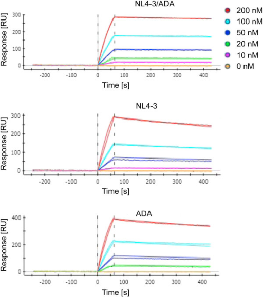 Kinetics of 447-52D antibody binding to gp140 constructs with SPR measurements. ProteOn XPR36 measurements were performed with immobilized 447-52D antibody (ligand) and rising concentrations of the different gp140 constructs (analyte). Note the remarkable slower dissociation of the NL4-3/ADA construct from the 447-52D mAb in contrast to the NL4-3 and ADA construct, which is responsible for its higher affinity to 447-52D (see also Figure 2 and table of Additional file 6 with listed KD, kon and koff rates).