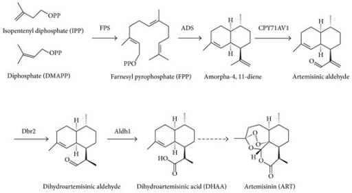 Biosynthesis pathway of ART.