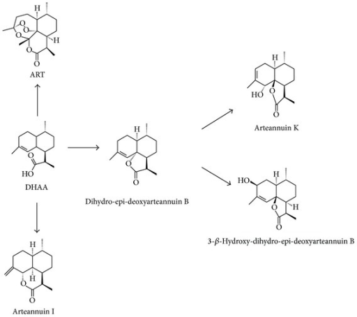 Proposed biosynthesis pathway of ART and its analogs from DHAA in suspension-cultured cells of A. annua.