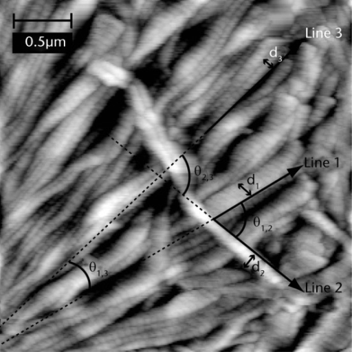 Representative AFM image of supraspinatuscontrol tendon annotated to illustrate measurement of the diametersof (d1, d2 and d3) and the angles between (θ1,2, θ2,3 and θ1,3)three fibrils. Similar measurements were performed for 10 fibrilsin each image.