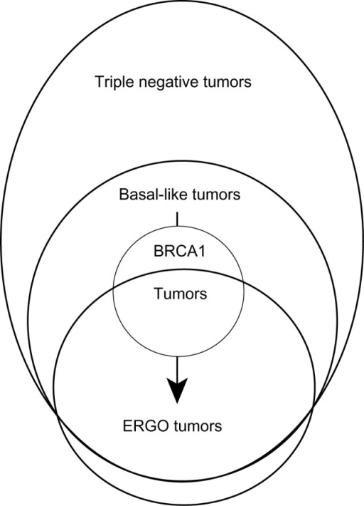 A conceptual model for the evolutionary development of ERGO tumors qualitatively describing a governing hypothesis to explain the results of the paper in terms of relationships between the related but distinct categories of ERGO, triple-negative, basal-like, and BRCA1 tumors.