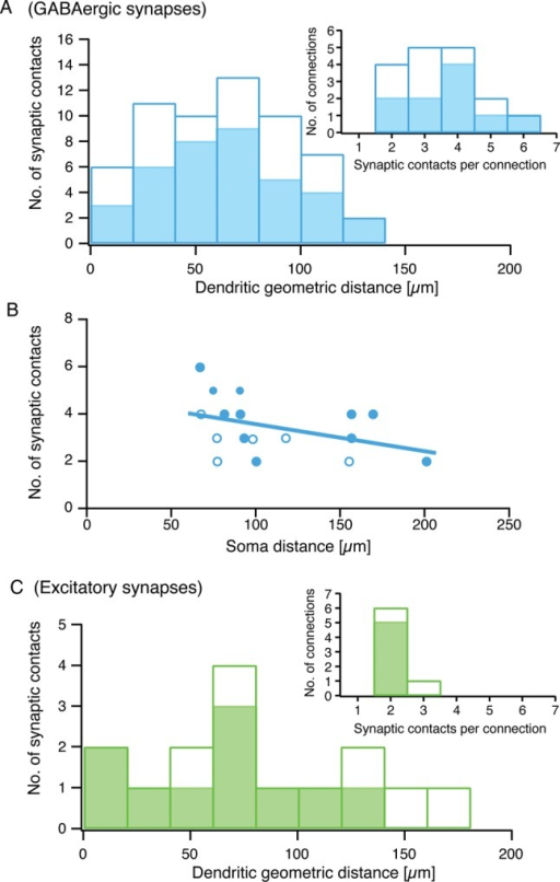 Synaptic contacts are broadly distributed along the postsynaptic dendritic tree. Individual geometric distances of the light microscopically identified putative synaptic contact sites in pairs of L4 interneurons and L4 spiny neurons (n = 17). (A) Bar histogram of geometric distances of putative inhibitory synaptic contacts to the soma of L4 spiny neurons. (B) Relationship between number of synaptic contacts and intersoma distance in BIn-L4 spiny neuron pairs. Filled circles represent BIn-L4 spiny neuron pairs, open circles connections with cluster 1 or 2 L4 interneurons. No correlation was found between the number of synaptic contacts and their distance from the soma. (C) Same diagram as in (A) but for excitatory synapses in reciprocally connected cell pairs (n = 7). Insets in (A) and (C) show the distribution of the number of synaptic contacts per connection. Filled bars in (A) and (C) and filled circles in (B) mark results obtained for BIn-L4 spiny neuron pairs alone, whereas open bars or circles represent connections including cluster 1 and cluster 2 FS L4 interneurons with L4 spiny neurons.