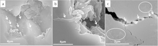 High resolution SEM images from S0.3-1 showing (a) embedded CNTs, (b) embedded GNPs on the top of a worn surface, (c) CNT bridging cracked grains (arrowed) and GNP lying on the worn surface (circled).