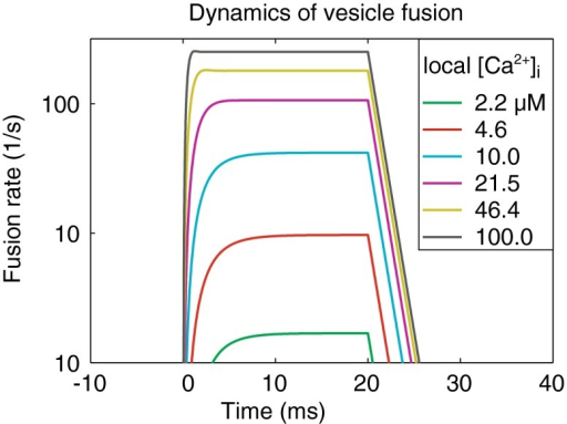 Kinetics of vesicle fusion shows very strong [Ca +2] i dependence, figure from Hemmert et al. 2003.