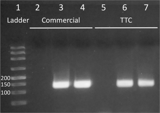 PCR amplification of Neisseria gonorrhoeae porA pseudogene from clinical samples.Lane 1: ladder 50/100/150/200/300/500/800/1500 bp. Lanes 2 to 4: NTC and two positive samples performed with commercial cycler. Lane 5 to 7: NTC and two positive samples performed with TTC.