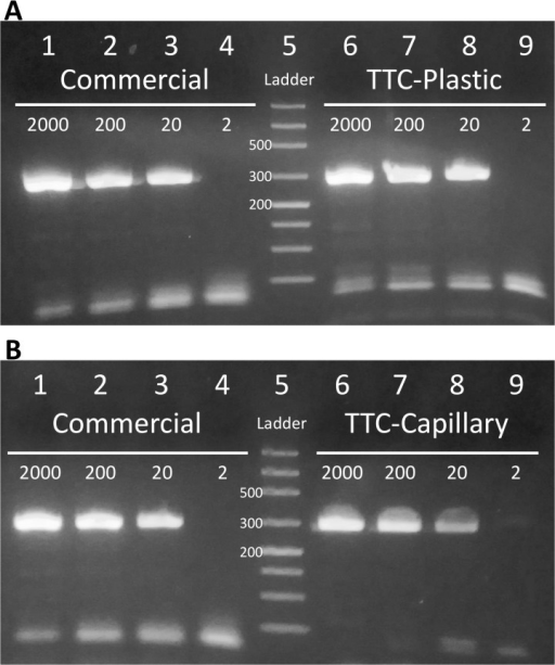 Speed and sensitivity of PCR reactions demonstrated by TTC.PCR reactions to amplify 281 bp of the nuc gene from 2000, 200, 20, or 2 copies of S. aureus genomic DNA. (A) Lanes 1 to 4: PCR products from commercial thermal cycler. Lane 5: ladder. Lanes 6 to 9: PCR products from TTC with thin-walled plastic tubes, using a protocol of 2 min hot-start, followed by 40 cycles of 11 s and 17 s denaturation and annealing/extension. The 40-cycle reactions were completed in 22 min. (B) Lanes 1 to 4: PCR products from commercial thermal cycler. Lane 5: ladder. Lanes 6 to 9: PCR products from TTC with glass capillary tubes, using a protocol of 2 min hot-start, followed by 40 cycles of 7 s and 8 s denaturation and annealing/extension. The reactions were completed in 13 min and 3 s.