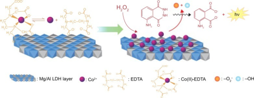 Possible chemiluminescence mechanism for the Co(II)-ethylenediaminetetraacetic acid (EDTA)-intercalated Mg/Al layered double hydroxide (LDH)-enhanced luminol–H2O2 system.Note: Reprinted from Zhang LJ, Chen YC, Zhang AM, Lu C. Highly selective sensing of hydrogen peroxide based on cobalt-ethylenediaminetetraacetate complex intercalated layered double hydroxide-enhanced luminol chemiluminescence. Sens Actuators B Chem. 2014;193:752–758, Copyright 2014, with permission from Elsevier.82