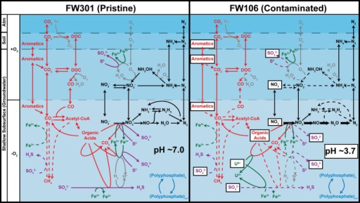 Predicted geochemical cycling in the FRC subsurface based on metabolic profiles of pristine (FW301, left) and contaminated (FW106, right). The denitrification pathway genes are labeled in bold in the FW106 figure to indicate their overabundance in this metagenome compared to FW301. Dotted lines indicate either that the pathway genes were not detected in the metagenomes, detected in very low abundance, or that bacteria known to implement these pathways were not detected or in extremely low abundance (<1%). Contaminants present in high concentrations at the FW106 site are shown in white boxes. Partitions indicate different geochemical and electrochemical environments that may transiently exist at the OR-IFRC sites and do not necessarily represent the specific environmental partitioning present in these environments.