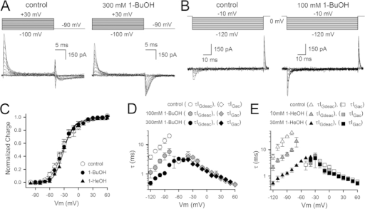 Biophysical properties of Shaker-IR-W434F upon alkanol application.(A) Representative IGac recordings of Shaker-IR-W434F in control condition (left) and in presence of 300 mM 1-BuOH (right) elicited using the pulse protocols shown on top. (B) Representative IGdeac recordings elicited with the deactivation pulse protocols shown on top; in control conditions (left) and in presence of 100 mM 1-BuOH (right). Inter-sweep holding potential was −90 mV and the depolarizing pre- and post-pulse to 0 mV were 15 ms in duration. (C) Charge vs. voltage QV curves in control condition (white circles, n = 10) and in presence of 300 mM 1-BuOH (black circles, n = 5) or 30 mM 1-HeOH (black triangles, n = 4) were created by plotting the normalized charge (obtained from integrating IGac recordings from pulse protocols shown in panel A) as a function of voltage. Curves shown are the average fit to a Boltzmann equation. (D) Time constants of VSD activation (τIGac) in control condition (white diamonds, n = 8) and in presence of 100 mM (gray diamonds, n = 3) or 300 mM (black diamonds, n = 5) 1-BuOH. For VSD deactivation the weighted τIGdeac kinetics are shown. Note the gradual acceleration in τIGdeac between control (white circles), 100 mM 1-BuOH (gray circles) and 300 mM 1-BuOH (black circles). (E) Panel shows the voltage-dependent τIGac kinetics in control condition (white squares, n = 7) and in presence of 10 mM (gray squares, n = 3) or 30 mM (black squares, n = 4) 1-HeOH. Similar to 1-BuOH the τIGdeac kinetics accelerated in presence of 10 mM (gray triangles, n = 3) and 30 mM 1-HeOH (black triangles, n = 4), control conditions (white triangles).