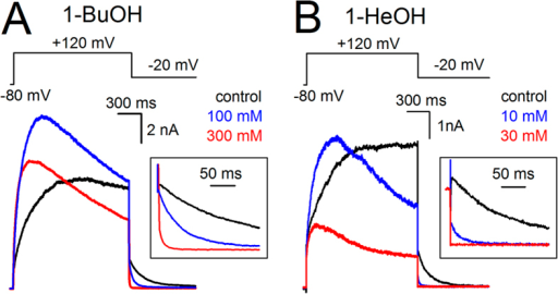 Alkanol-dependent activation of Shaker-IR-P475A.(A) Steady-state IK recordings of Shaker-IR-P475A in control condition (black), 100 mM (blue), and 300 mM (red) 1-BuOH elicited using the pulse protocol shown on top. (B) Steady-state IK recordings obtained in control condition (black), 10 mM (blue) and 30 mM 1-HeOH (red). In presence of alkanols the currents activated markedly faster and current inactivation was more pronounced. Insets show scale up views of the deactivating (IKdeac) tail currents.