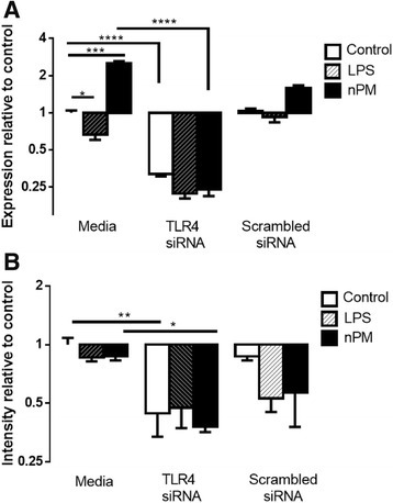 TLR4 response in mixed glia. Mixed glia: TLR4 siRNA treatment lowered TLR4 mRNA and protein, and attenuated nPM induction of TLR4 mRNA. Media groups are non-transfected. a TLR4 mRNA, but not protein, was induced by nPM. TLR4 siRNA decreased TLR4 mRNA levels by 90% in nPM (ANOVA, p < 0.0001) and 70% in control groups (p < 0.0001). LPS treatment reduced TLR4 mRNA (p < 0.05). b TLR4 protein was not changed by nPM or LPS. TLR4 siRNA reduced protein levels by ca. 60% in all groups (ANOVA, p < 0.05)