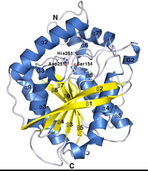 Three-dimensional structure of EstE1. A ribbon diagram of EstE1 shows the eight α-helices and eight β-strands that form a classical α/β hydrolase fold [17]. The α-helical segments and β-strands are shown in blue and yellow, respectively. G2 and G3 represent 310-helices. Helix α1 is not shown because of its disordered electron map. The catalytic triad containing residues Ser154, Asp251, and His281, are shown in stick representation. N and C denote the N and C termini, respectively.
