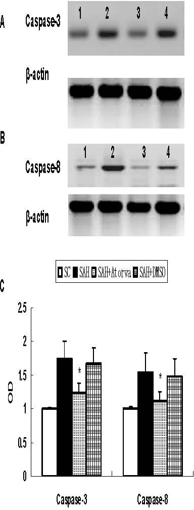 Western blot for expression of caspase-3 and caspase-8. Obvious increase of caspase-3 (P17) and caspase-8 (P18) was obtained in basal cortex, which was attenuated by atorvastatin. A, Represent expression of caspase-3. B, Represent expression of caspase-8. C, Each column represents 5 independent experimental results. (1, Sham operated control; 2, SAH; 3, SAH + Atorvastatin; 4, SAH+DMSO *, P < 0.05 vs DMSO group).