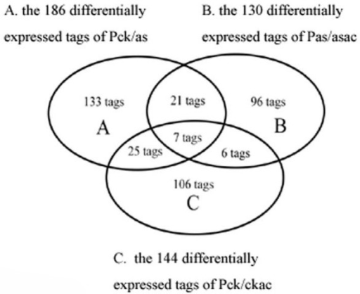 The Venn diagram among PCK/AS, PAS/ASAC, and PCK/CKAC. The diagram shows 21 common tags between PCK/AS and PAS/ASAC, 7 common tags in the three groups, 25 common tags between PCK/AS and PCK/CKAC, and 6 common tags between PAS/ASAC and PCK/CKAC.