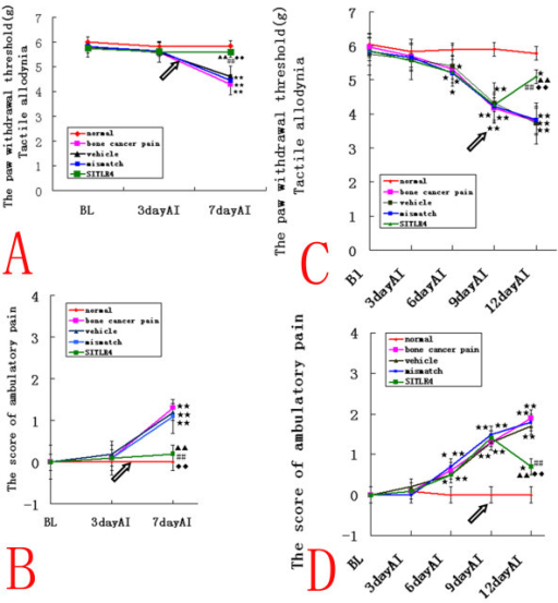 Intrathecal TLR4 siRNA439 attenuates bone cancer pain in the rat model. (A, B) In the siRNA-treated IBCP group, the PWTs were significantly higher and the ambulatory scores were significantly lower than those observed in mismatch siRNA- and vehicle-treated rats(n = 10, ANOVA2w, P < 0.01, pos-hoc Bonferroni, df = 4, F = 1.02), and there were no significant differences compared to normal rats. This indicated that intrathecal injection of TLR4 siRNA439 (SITLR4) could prevent the initial development of bone cancer pain. (C, D) In the siRNA-treated WBCP group, the PWTs were significantly elevated compared with the mismatch siRNA- and vehicle-treated rats(n = 10, ANOVA2w, P < 0.01, pos-hoc Bonferroni, df = 4, F = 0.96), but still lower than in normal rats (P < 0.05) Meanwhile, spontaneous pain was attenuated compared with mismatch siRNA- and vehicle-treated rats(n = 10, ANOVA2w, P < 0.01, pos-hoc Bonferroni, df = 4, F = 1.05). However, the ambulatory score was still higher than in normal rats (P < 0.05), which indicated that intrathecal injection of TLR4 siRNA439 (SITLR4) could alleviate, but not reverse, well-established bone cancer pain. Values are presented as mean ± SEM. *P < 0.05, **P < 0.01 vs. normal group; ▲ P < 0.05, ▲ ▲ P < 0.01 vs. vehicle-treated group; #P < 0.05, ##P < 0.01 vs. bone cancer pain group; ◆P < 0.05, ◆◆P < 0.01 vs. mismatch siRNA-treated group. Arrows indicate the siRNA injection times.
