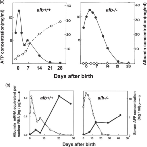 Albumin transcription and serum AFP concentrations.a. Time dependent change of serum AFP (•) and serum albumin (○) concentration after birth in alb+/+ and alb−/− rats.b. Time dependent change of serum AFP concentration (○) and amount of albumin gene transcript (•) in the nuclei of the liver of alb+/+ and alb−/− rats.The serum AFP concentration was measured by a single radial immunodiffusion method using a specific antibody against AFP. RNA was extracted from rat liver nuclei and quantitated by a method involving RNA-cDNA hybridization followed by S1 nuclease digestion (Modified from Cancer Res. 42, 306–308 (1982)).6)