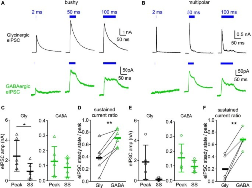 Glycinergic IPSCs are phasic compared to GABAergic IPSCs in response to sustained illumination. (A) IPSC responses evoked by different durations of light (2, 50, and 100 ms) in a bushy neuron. Notice that the glycinergic IPSCs peak shortly after the onset of the light pulse and decay rapidly even though the illumination is still on, whereas GABAergic IPSCs show little decay in amplitude. (B) Light evoked IPSC responses in a multipolar neuron. Traces in both (A) and (B) are averages of 10 trials. (C) Summary of the IPSC peak amplitudes (peak) and steady state amplitudes (SS) in bushy neurons. In (C-F): Gly: glycinergic IPSCs; GABA: GABAergic IPSCs. (D) Summary of the sustained current ratio in bushy neurons. (E) Summary of the IPSC peak amplitudes and steady state amplitudes in multipolar neurons. (F) Summary of the sustained current ratio in multipolar neurons. In (D) and (F): each connected pair represents a single neuron; black bar marks the average of the group. * p < 0.05; ** p < 0.01.
