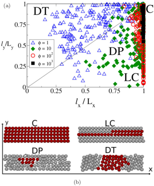 The morphology of the clusters of slipping particles depends on the elastic heterogeneitiy.(a) Scatter plot of the clusters dimensions, along the directions parallel and transverse to the shear, for system having different values of ϕ. By reducing the stiffness of the system we observe regions with different cluster shapes, indicated by the letters C, LC, DP, DT. (b) Schematic representations of the geometry of the clusters corresponding to the regions reported in the scatter plot. Here we show a system of dimension Lx = 20 and Ly = 5, the same behaviour is also observed for larger systems.