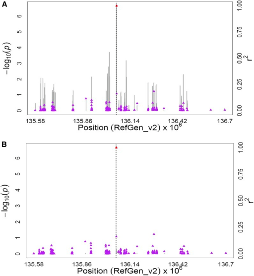 GWAS for the ratio of β-carotene to β-cryptoxanthin plus zeaxanthin content in maize grain. (A) Scatter plot of association results from a unified mixed model analysis of the ratio of β-carotene to β-cryptoxanthin plus zeaxanthin and LD estimates (r2) across the crtRB1 chromosome region. Negative log10-transformed P-values (left y-axis) from a GWAS for the ratio of β-carotene to β-cryptoxanthin plus zeaxanthin and r2 values (right y-axis) are plotted against physical position (B73 RefGen_v2) for a 1.2-Mb region on chromosome 10 that encompasses crtRB1. The vertical lines are –log10P-values for all tested SNPs in this region. Triangles are the r2 values of each SNP relative to the peak polymorphism (indicated in red) at 136,059,748 bp. The black vertical dashed lines indicate the start and stop positions of crtRB1 (GRMZM2G152135). (B) Scatter plot of association results from a conditional unified mixed model analysis of the ratio of β-carotene to β-cryptoxanthin plus zeaxanthin and LD estimates (r2) across the crtRB1 chromosome region, as in A. The peak polymorphism from the unconditional GWAS (crtRB1 InDel4; 136,059,748 bp) was included as a covariate in the unified mixed model to control for the crtRB1 effect.