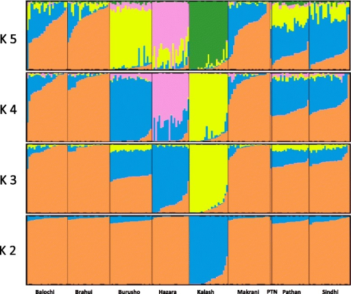Admixture results of Pathan (PTN) individual to other ethnic groups in South Asia. Admixture results for K = 2 and K = 5 for the Pathan individual combined with eight ethnic genomes from HGDP dataset. The analysis was based on 643,281 SNVs. Each individual is represented by a vertical line, divided into colored segments that represent membership coefficients in the subgroups.