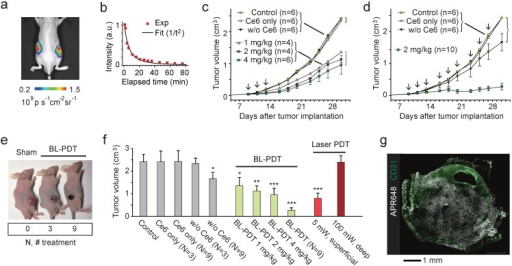 Effects of BL-PDT on tumors in vivo. a, Luminescence (575-650nm) from tumors injected with Luc-QD (50 pmol i.t.) and CTZ (28 nmol i.v.). b, Luminescence intensity from the tumor over time. c, Tumor growth curves for various treatment conditions. Arrows indicate the three sessions of BL-PDT. d, Tumor growth curves for extended BL-PDT protocols with 2-3 day treatment intervals (arrows). e, Photos of mice (at day 23) treated 0, 3, and 9 times, respectively. f, Tumor sizes measured at day 30 for control, sham-treated, BL-, and laser-PDT-treated mice (calculated from the data in b: N=3 or N=9 indicates groups that received three or nine treatment sessions.) g, Immunohistology with APR648 indicating apoptotic cell death within a tumor. Scale bars, 1 mm in (g). Error bars, mean +/- s.d. Two-sided Student test p values: * <0.05, ** <0.01, *** <0.001.