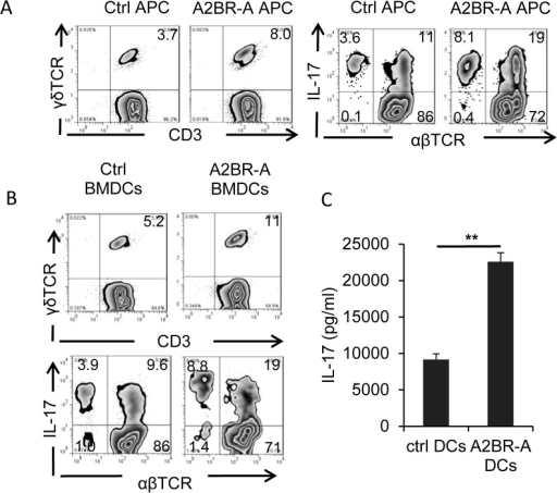 A2BR agonist-treated dendritic cells acquired increased ability to stimulate γδ and Th17 autoreactive T cells.A) Splenic APCs isolated from A2BR agonist-treated, immunized B6 mice have stronger ability stimulating γδ, and Th17 autoreactive T cells. Responder T cells were isolated from immunized B6 mice 13 days post immunization. After a 3-day co-incubation of T cells and splenic APCs, the activated T cells were separated by Ficoll gradient centrifugation and staining for γδ T cells or Th17 cells. B) A2BR agonist-treated BMDCs acquired increased stimulating activity to stimulate γδ, and Th17 autoreactive T cells. BMDCs were cultured from bone marrow cells of immunized B6 mice. After a 5 day co-culture of in vivo primed responder T cells with A2BR agonist-treated and-untreated BMDCs in the presence of immunizing peptide, the number of γδ T cells and IL-17+ T cells among activated T cells were examined (B) and the IL-17 and IFN-γ amounts in 48 h-stimulated culture supernatants were compared (C). **p< 0.01.