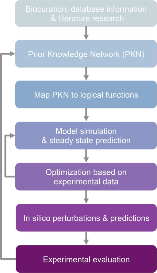 Model construction and optimization workflow.The Prior Knowledge Network (PKN) is constructed after collecting relevant information from various sources, including network databases and literature. The PKN is translated into logical functions, describing the regulatory relations among gene products. The logical model is simulated under the preferred conditions, resulting in one or more steady states, where all logical rules are satisfied. The model goes then through an optimization procedure, where the goal is to fit the resulting steady states with available experimental data by altering regulatory rules. The optimization typically includes removing outdated / low confidence links, adjusting their representation and adding new regulatory rules. The process is iterated until the simulation fits the available data. The model can then be used as a predictive tool, by performing in silico perturbations. Validation of the predictions can lead to discovery of missing regulatory links that are then added to the PKN.