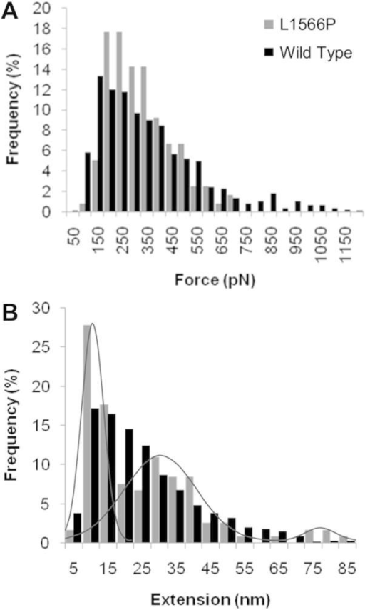 AFM force and extension data for L1566P compared with the wild type construct. Comparison of the frequency of force (A) and extension (B) events observed during unfolding features of the wild type and L1566P constructs showing a change in distribution of the extension profile, resulting in three distinct peaks (highlighted by grey lines).