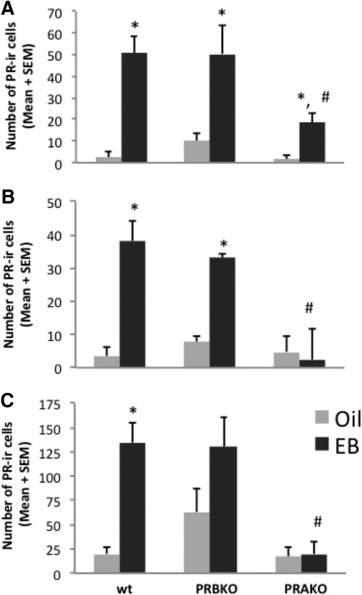 A–C, Estradiol induces PR-A and PR-B in a brain region-specific manner. Estradiol induces PR-A and PR-B in the VMN (A), but not in the ARC (B) or MPA (C), of PRBKO and PRAKO mice. *p < 0.05, for differences between vehicle and EB groups within each genotype; #p < 0.05, for differences between EB-treated genotypes.