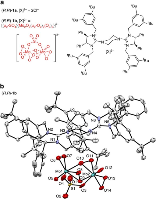 Bisguanidinium ion pairs (R,R)-1a and (R,R)-1b.(a) Structure of bisguanidinium salts. (b) X-ray crystallographic structure of [BG]2+[(μ-SO4)Mo2O2(μ-O2)2(O2)2]2− (R,R)-1b (ellipsoids at 50% probability).
