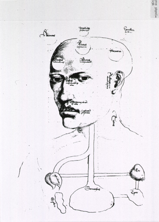 <p>Head and torso of man showing localization in brain, placement of senses, and some viscera (eg., stomach, heart, lungs, spleen, etc.).</p>
