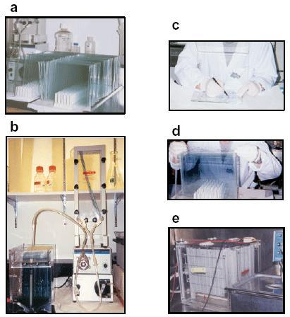 Practical aspects of 2DDE. (a) Preparation of glass plates. (b) Apparatus used to simultaneously pour 24 denaturing gradient gels. (c) Preparing 1st dimension for transfer. (d) Transfer of 1D strip to 2D gel. (e) Simultaneous running of multiple gels.