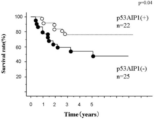 Overall survival curves according to p53AIP1 gene expression. Differences are significant (p = 0.04). Number of patients in each group, positive, 22; negative, 25.