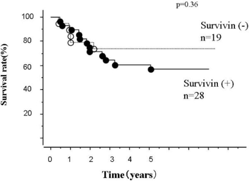 Overall survival curves according to survivin gene expression. Differences are not significant (p = 0.36. Number of patients in each group, positive, 28; negative, 19.