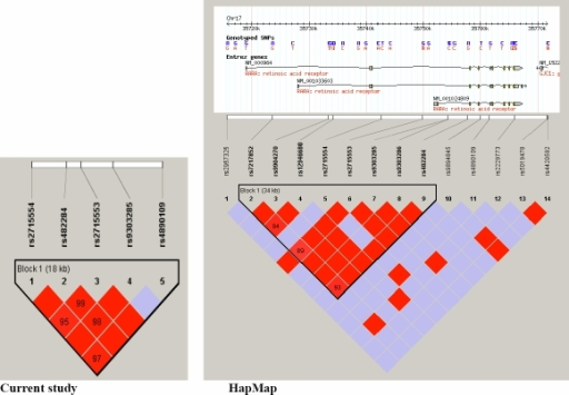 Linkage disequilibrium (LD) map comparing the current study with HapMap data for single nucleotide polymorphisms in the RARA gene. In the left hand panel is shown the LD block with r2 values indicated in the red diamonds and the position of the 5 tag SNPs for the current study. In the right hand panel the LD map from available HapMap data with position of available SNPs as well as the 5 tag SNPs (r2 values are indicated in the diamonds).  At the top of the panel are shown the different RARA alternatively spliced transcripts at this location on chromosome 17 (http://genome.ucsc.edu/).